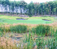 Wetland mitigation areas